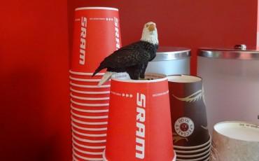 Låt oss presentera gruppsetet SRAM Eagle!